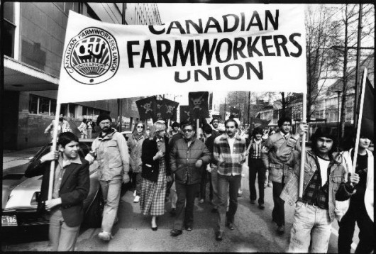 essay on the united farm workers